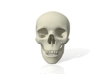 Calavera en 3D