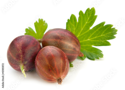 Gooseberry with leaf