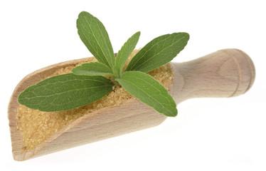 stevia rebaudiana healthy herb - no sugar