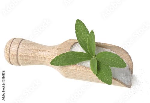 stevia rebaudiana healthy herb