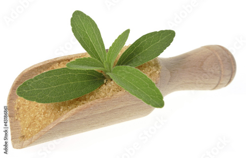 stevia rebaudiana healthy herb - no sugar