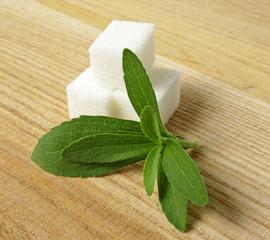 still life with stevia rebaudiana