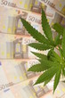 Cannabis plant and lot of euro money from drug