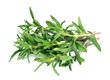 Thyme fresh herb