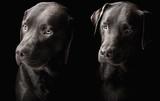 Fototapete Belle - Schönheit - Haustiere