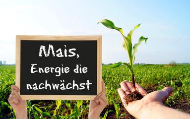Mais - Energie die nachwächst
