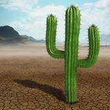 Fototapete Mexico - Saguaro - Sandwüste