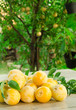 Prugne gialle, yellow plum