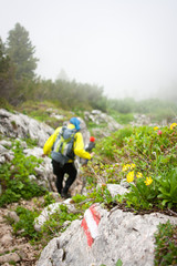 Mountaineering in the Alps - hikers walking down a hiking trail