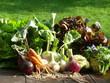 junges Gemüse aus Bioanbau