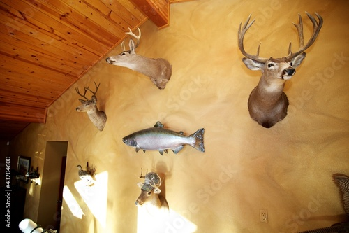 Fotobehang Jacht Deer Mounts