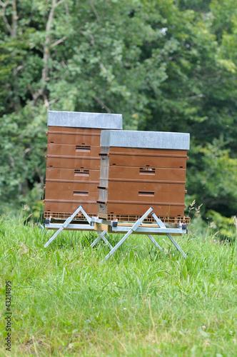 Les ruches alpines
