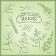 Vector Herbs Set