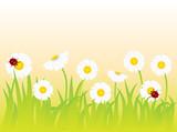 Fototapeta pąk - błąd - Kwiat