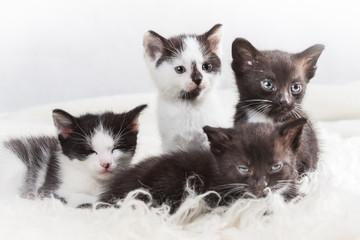 Sibling kittens closeup