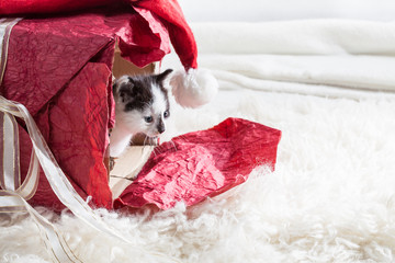 Young kitten in a present box
