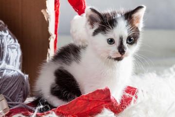 Kitten next to a present box