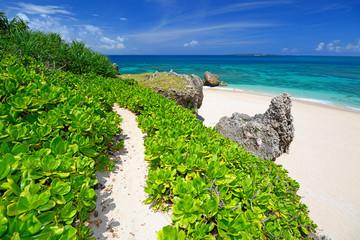 コマカ島の丘に続く小道