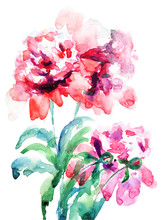 Vackra pion blommor