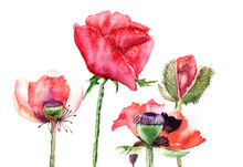 Stilisierte Poppy flowers illustration