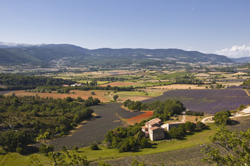 Lavender fields near to Sault in Provence.
