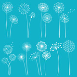 Set of dandelions - 43233424