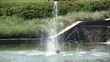 Fountain in decorative pond