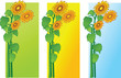 color backgrounds with sun flowers