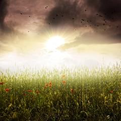 Feld im Sonnenlicht