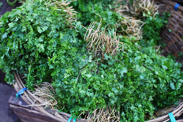 Coriander herb bunches on the market in Asia