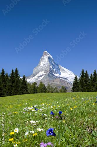 Matterhorn mit Bergwiese © by-studio