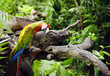 Colorful parrot in the jungle