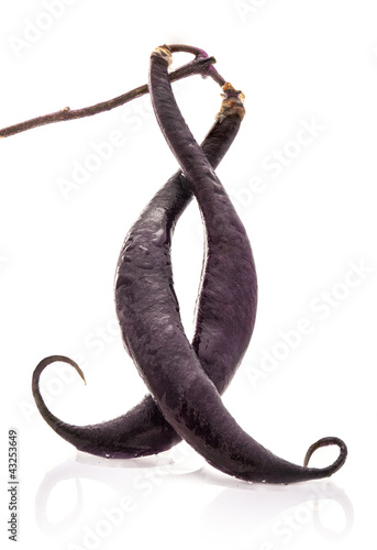 French Black beans isolated on white background