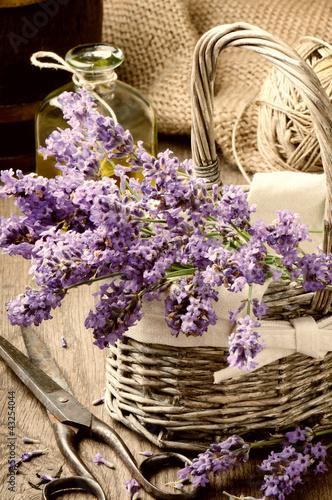 Bunch of freshly cut lavender - 43254044