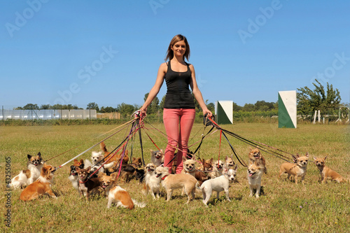 girl and chihuahuas