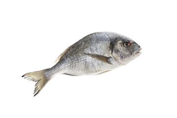 balık 01