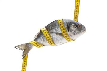 balık 02