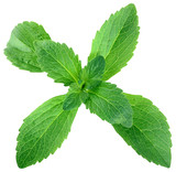 Stevia Leafs Cut Out