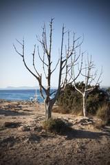 alberi sul mare