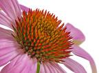 Fototapete äster - Blume - Blume