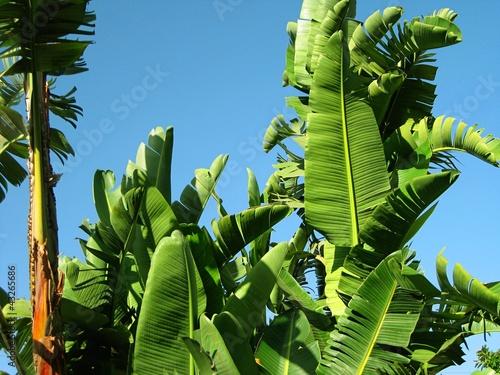 Piante Palme : Quot piante tropicali palme in un giardino immagini e