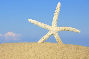 Starfish on Tropical Beach