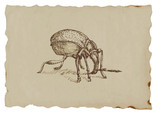 Snout beetle - hand drawing of an animal on the brown paper poster