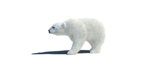 polar bear 3d illustration