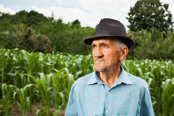 Senior farmer with a corn field in the background