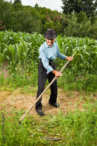 Senior farmer mowing the grass with scythe