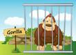 gorilla in cage
