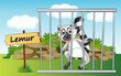 lemur in cage