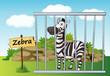 zebra in cage