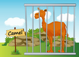 Camel in cage
